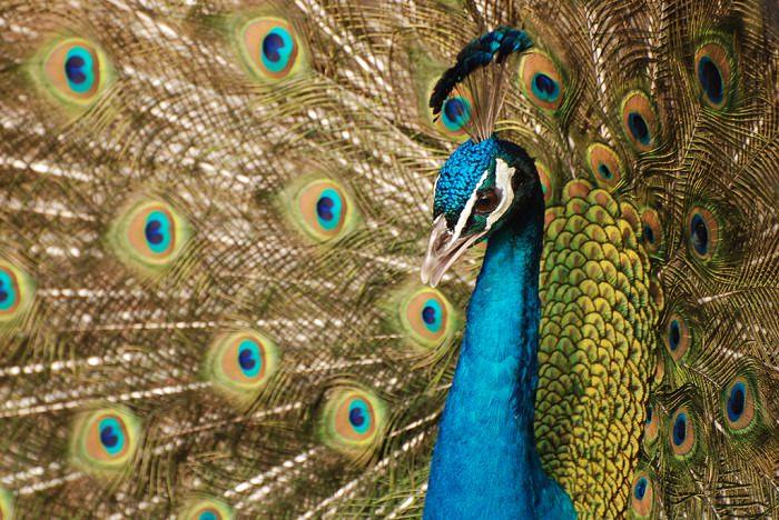 ציפורים צבעוניות