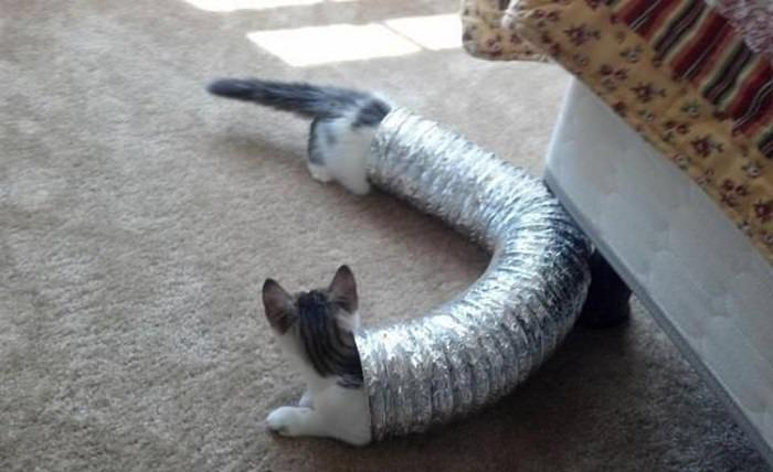 חתולים ברגע הנכון