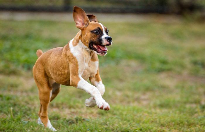 בדיקות ביתיות לבעלי חיים