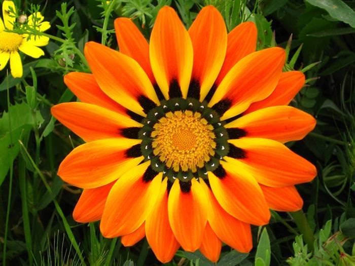 פרחים צבעוניים יפהפיים