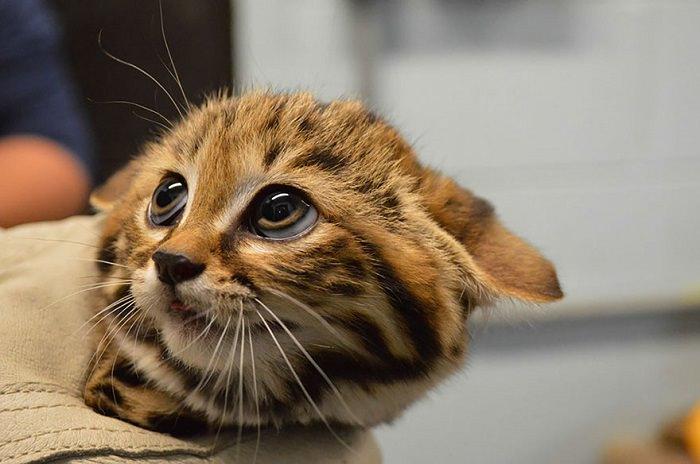 חתולים שלא הכרתם