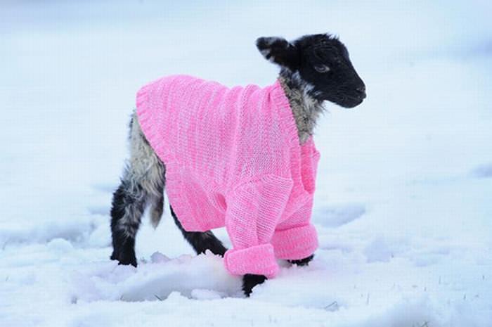 חיות מוכנות לחורף