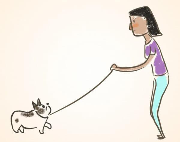 איך ללמד את הכלב טריקים