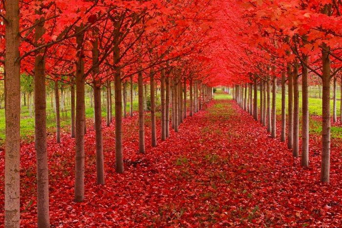 עצים מדהימים