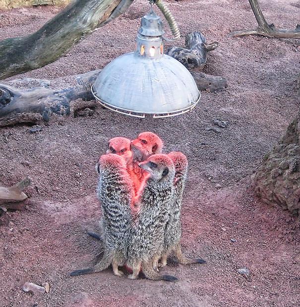 חיות מתחממות