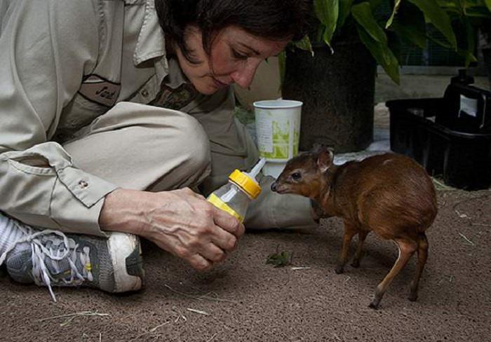 החיות הקטנות ביותר בעולם