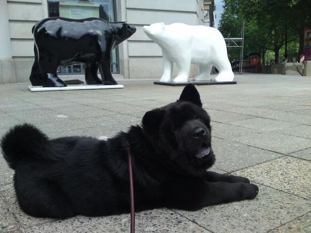 כלבים פרוותיים