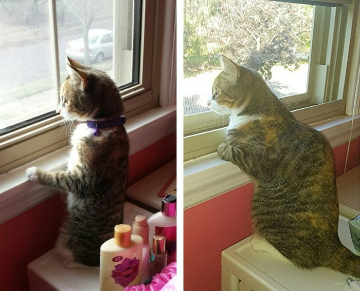 חתולים קטנים וגדולים