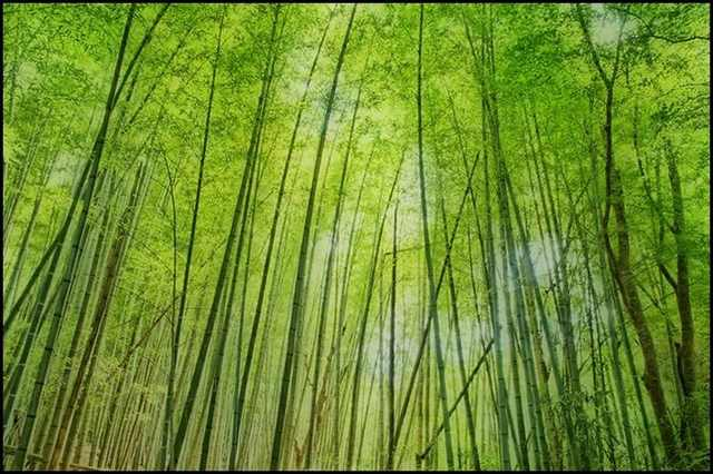 יערות במבוקים