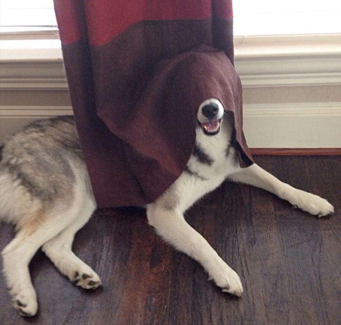 כלבים מחבאים