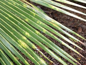 מחלות של צמחים