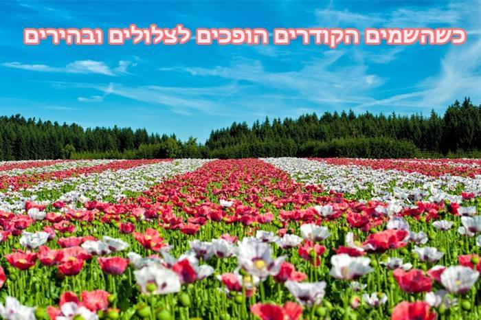 ברכת אביב