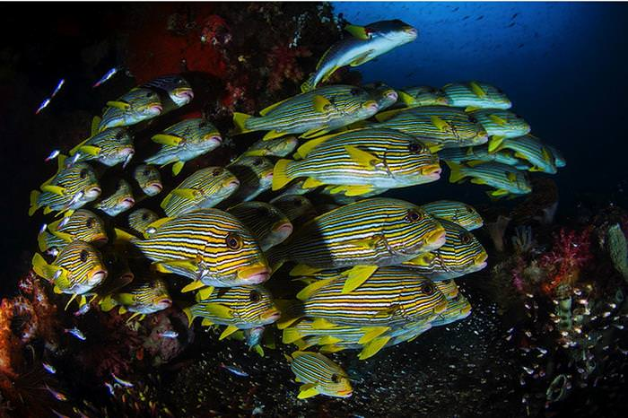 תחרות צילום מתחת למים