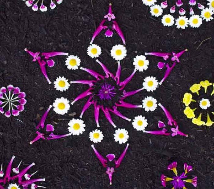 מנדלה פרחים