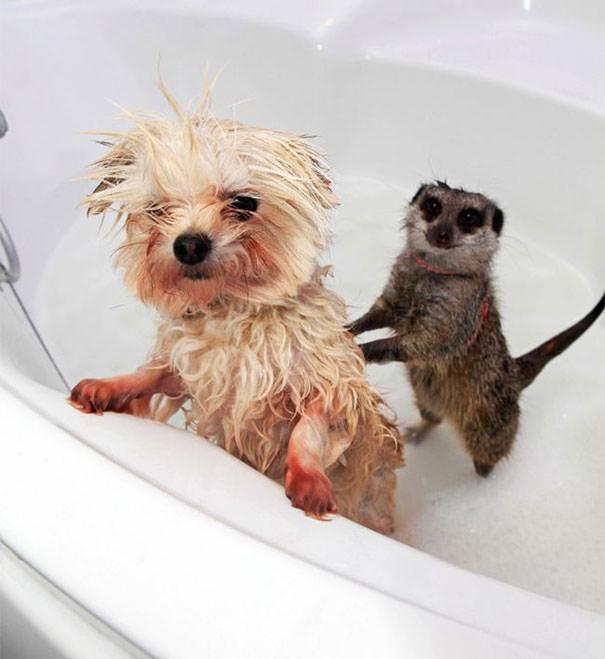 חיות באמבטיה