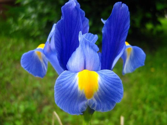 פרחים וציטוטים מלאי השראה
