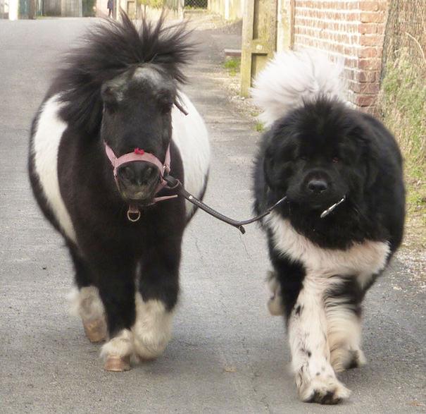 סוסים קטנים