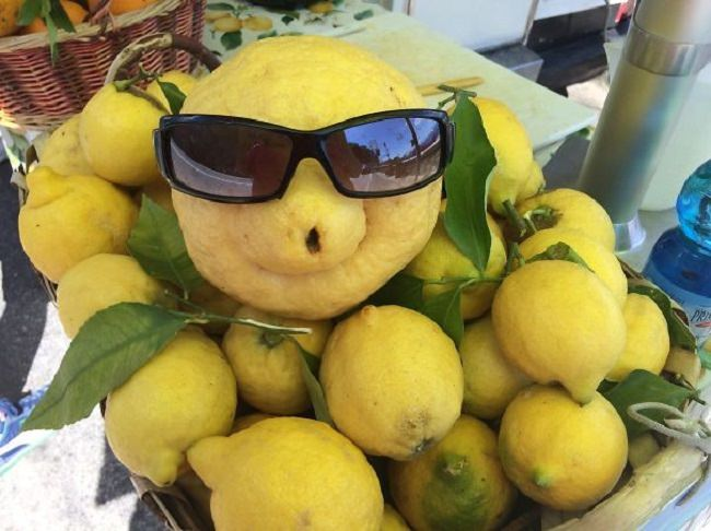פירות וירקות מצחיקים