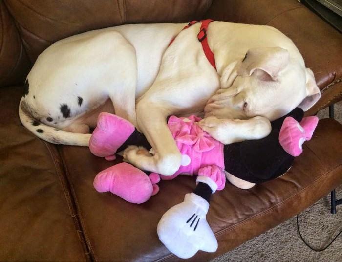 חיות עייפות
