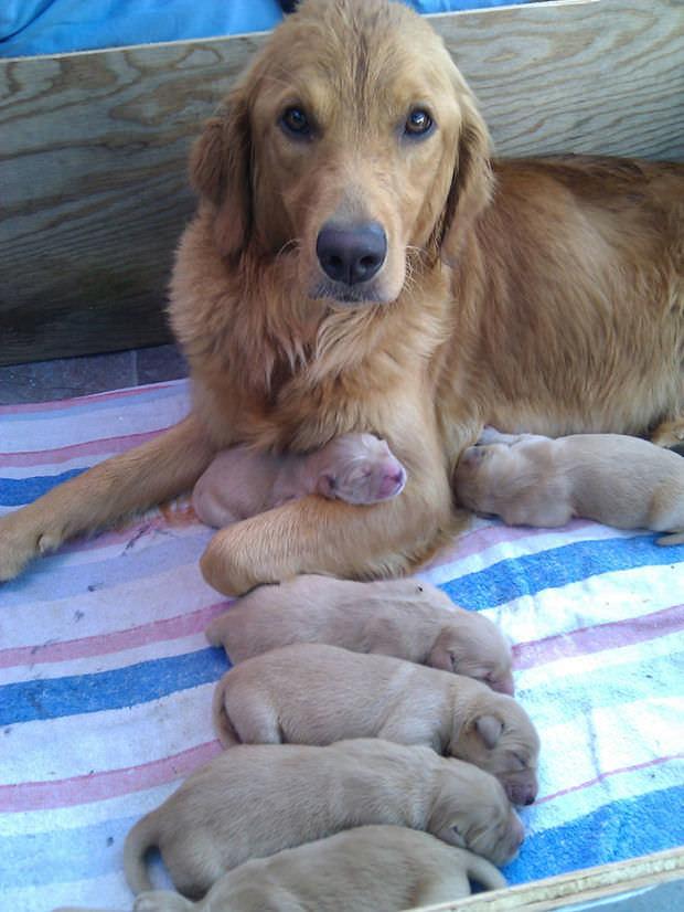 כלבים הורים וילדים