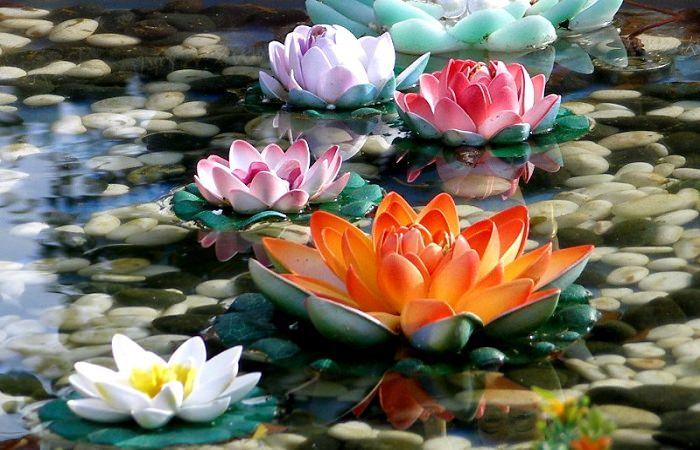 פרח הלוטוס