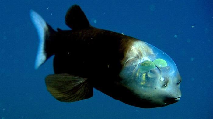 יצורים ימיים שנראים כמו חייזרים
