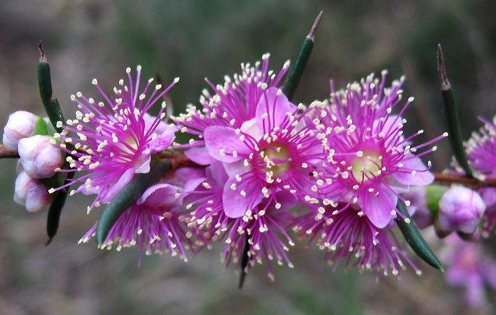 פרטים מרתקים על פרחים