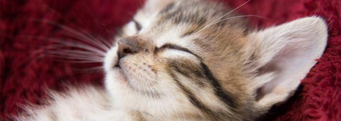 תרופות סבתא לטיפול בחיות מחמד