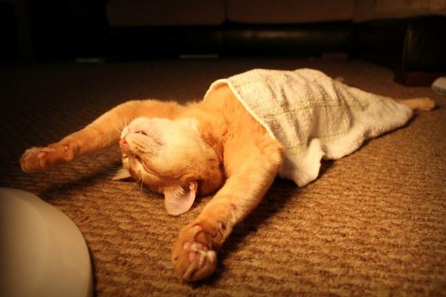 חתולים שישנים בתנוחות ומקומות לא צפויים