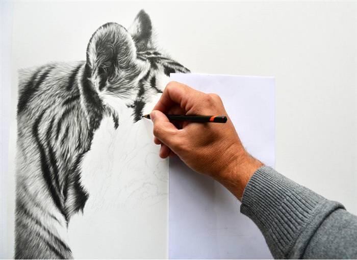 ציורי חיות