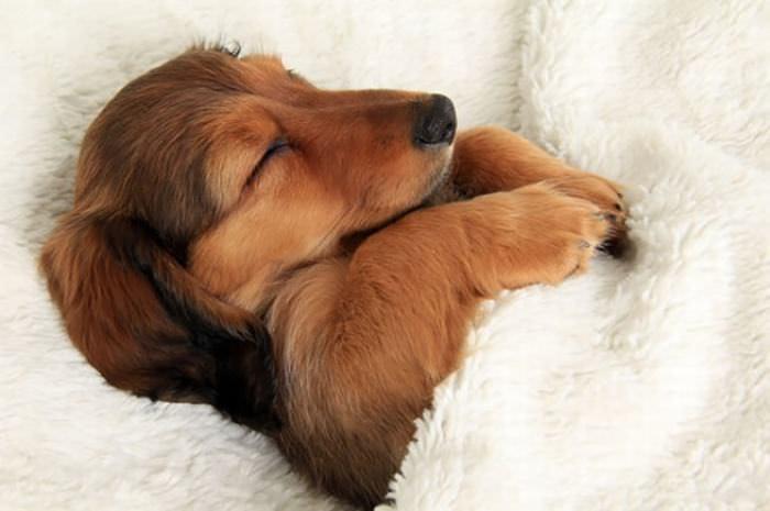 כלבים חמודים במיטה