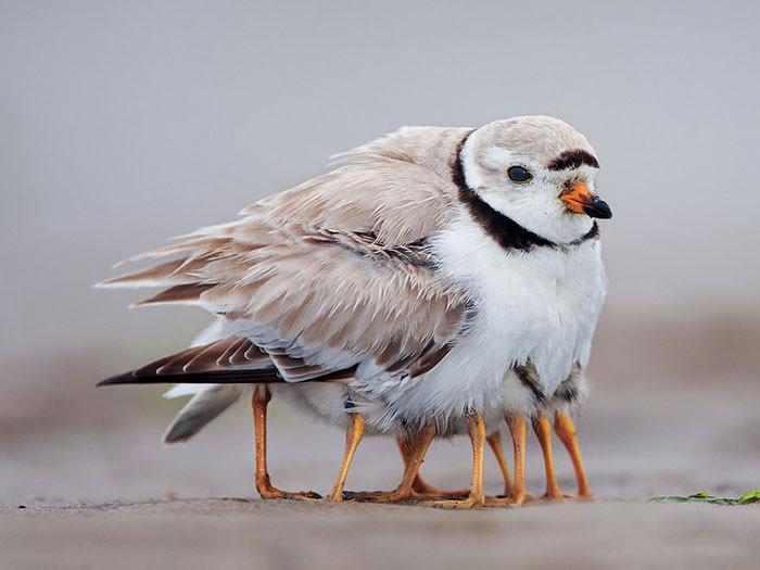 אמהות ציפורים וגוזליהן