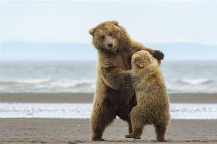 דובה וגור נראים רוקדים