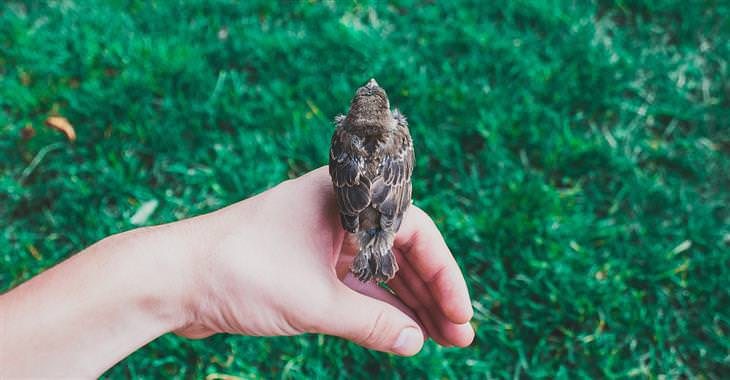 ציפור עומדת על כף יד