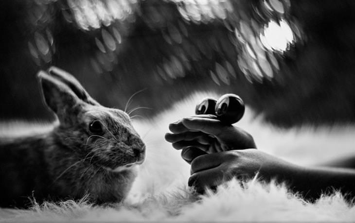 משחק בין ילד לבין ארנב