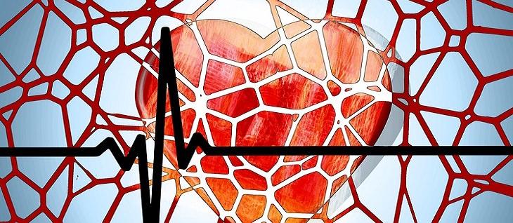 תמונה של לב עם רקע של כלי דם