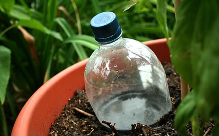 בקבוק פלסטיק בתוך האדמה