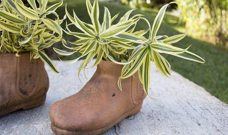 מגפיים שהפכו לעציץ