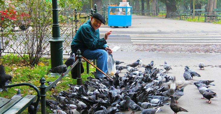 איש קשיש מאכיל יונים ועושה שלום למצלמה