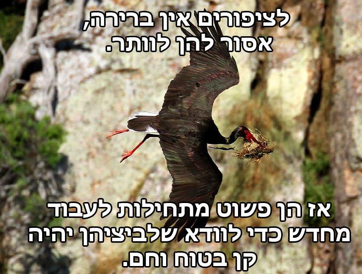 לציפורים אין ברירה, אסור להן לוותר אז הן פשוט מתחילות לעבוד מחדש כדי לוודא שלביציהן יהיה קן בטוח וחם.