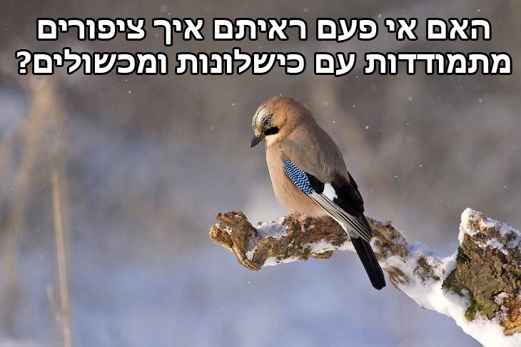 האם אי פעם ראיתם איך ציפורים מתמודדות עם כישלונות ומכשולים?