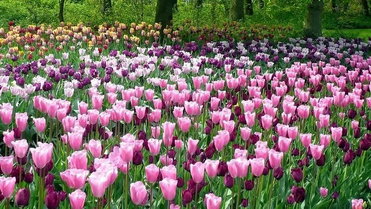 פרחי צבעוני ורודים וסגולים