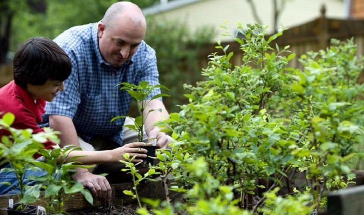 אב ובנו מטפחים את החצר יחדיו