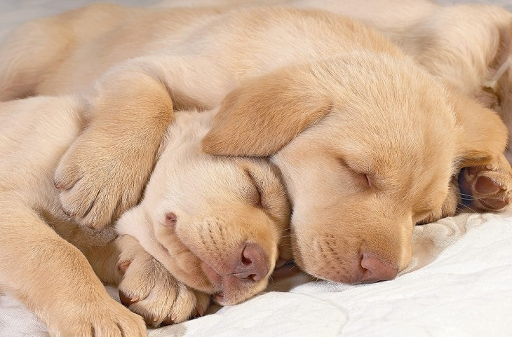 זוג גורי כלבים ישן מחובק
