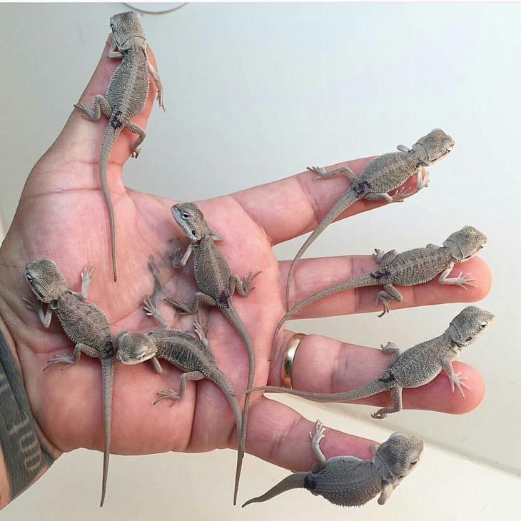 חיות קטנות יותר מכף היד