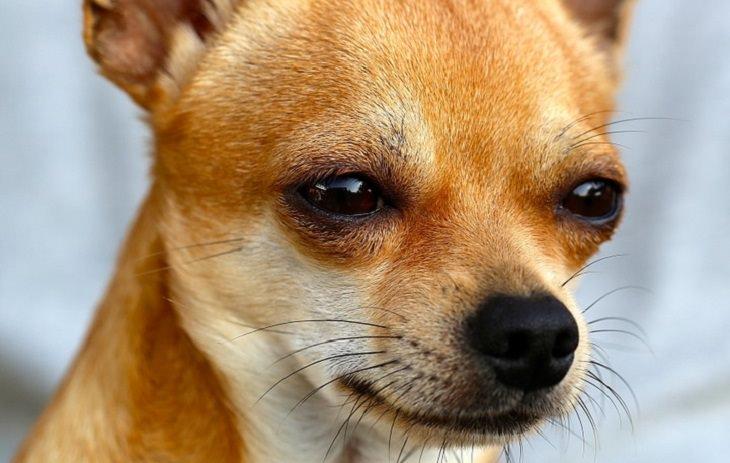 כלב עם הבעה מזלזלת
