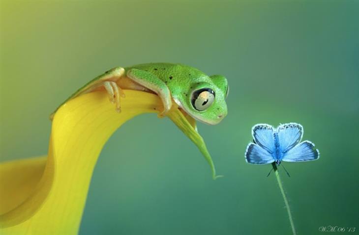 צפרדע יושבת על עלה ומביטה בפרפר