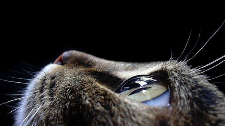 קרנית עינו של חתול