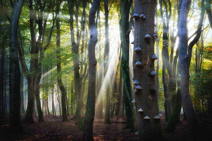 עצים עם פטריות עליהם