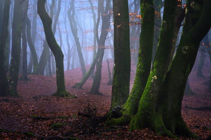 יער בערפל